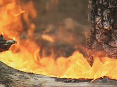 wildfire \ forest fire \ fire \ flames \ firefighters \ black hills fire \