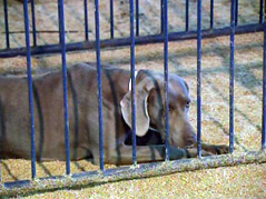 second chance rescue center \ rescued dogs in turner county \ puppies \ puppy \ dog \ dogs