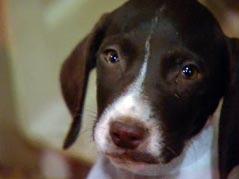 humane officer, dog, dogs