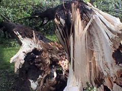 tree \ storm damage