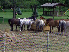 leif ericson day camp ymca horse accident campers