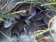 la nina weather spring sweet baby bunnies rabbits