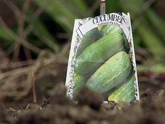 employee garden / avera mckennan