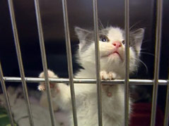 sioux falls area humane society pets animals adoption full shelter