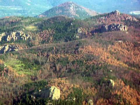 pine beetle damage black hills forest dead trees