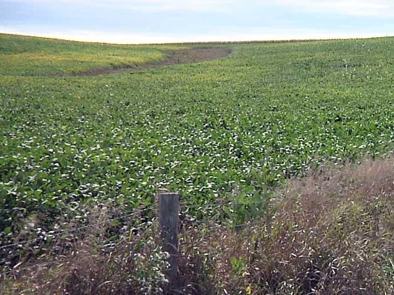 soy bean fields farming crops harvest