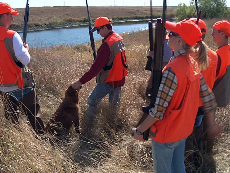pheasant hunting orange blazers hunting dog hunters