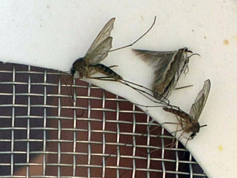 mosquito sioux falls traps early biting bugs