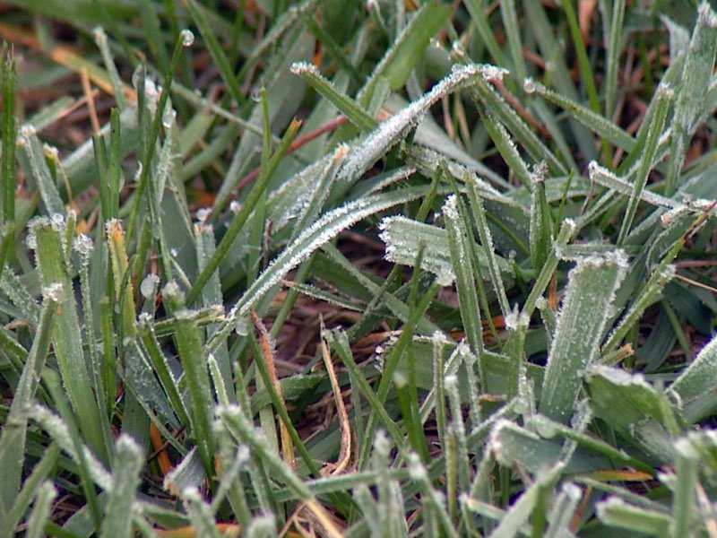 frost chances weather