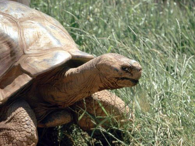 Methuselah old turtle that died at Reptile Gardens now has statue to honor him