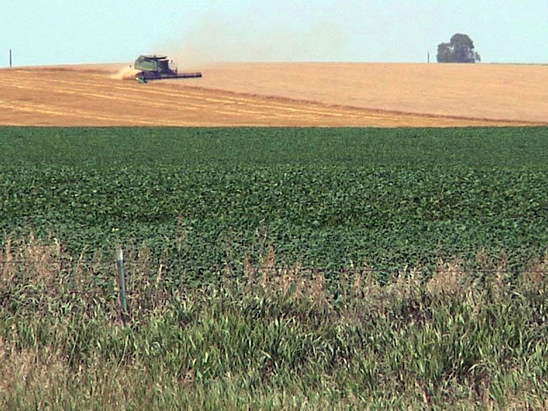 farming field crops drought