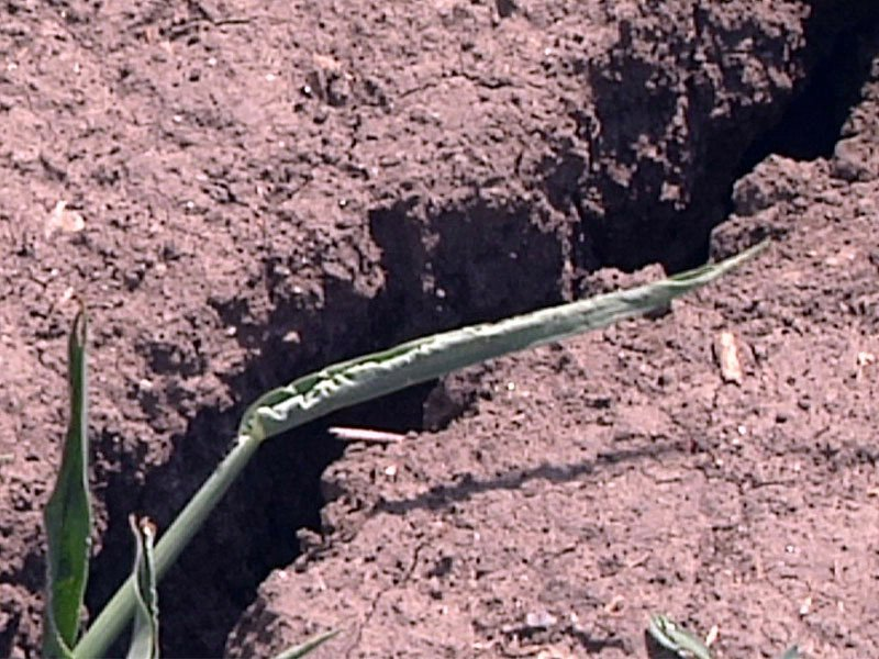 crack in land crops dry drought heat