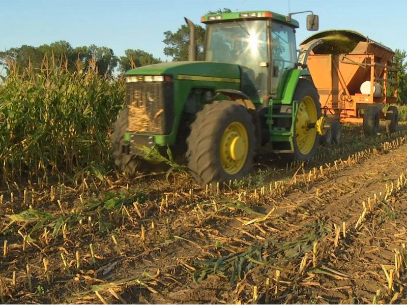 farming silage crops drought harvest