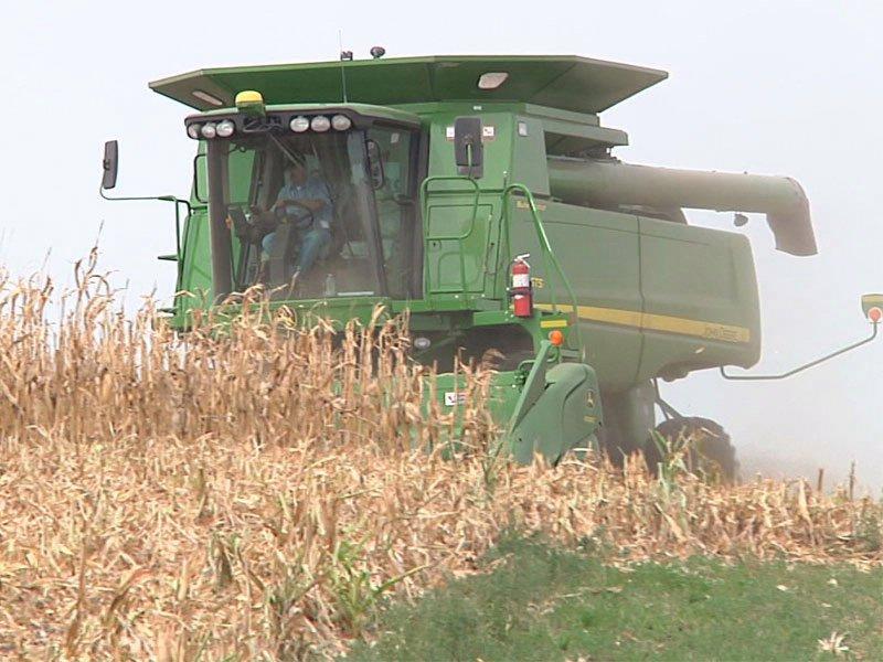 harvesting combining field corn