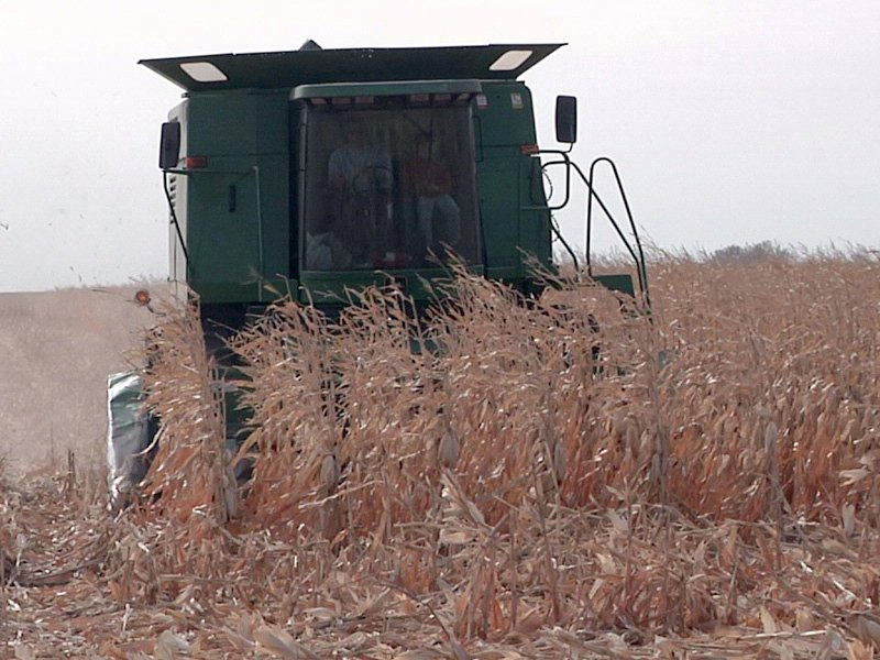 agriculture crops big corn harvest sisseton area combine markets near claremont