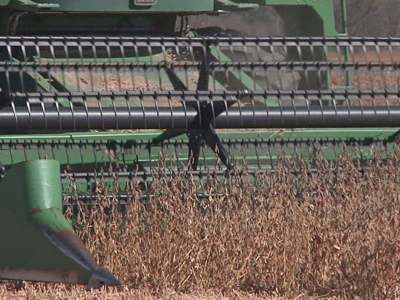soybean harvest soybeans crop farming agriculture markets