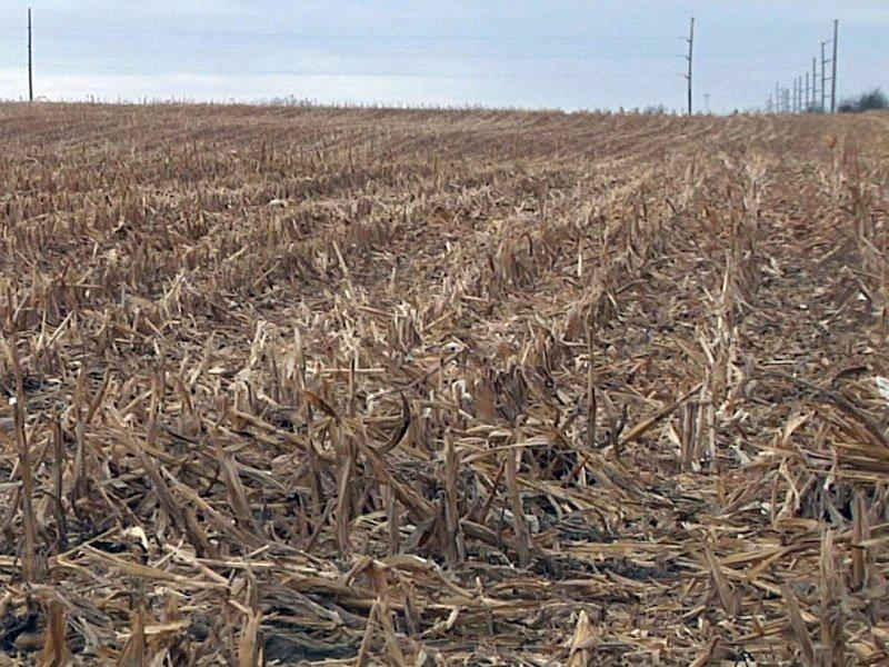 dry farm fields crops