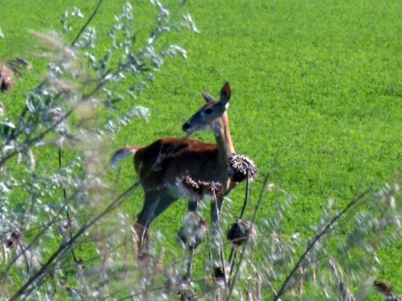 sioux falls deer hunting season