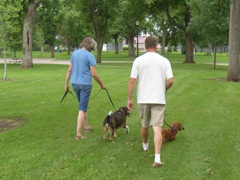 health human dog pets healthbeat