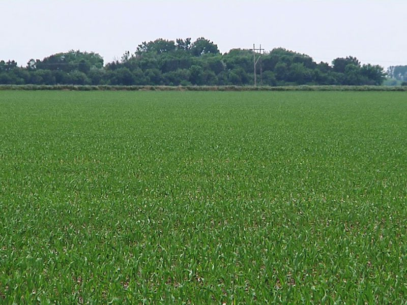crops growth june farm fields