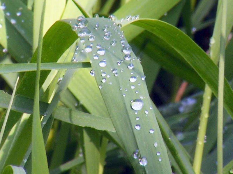 rainfall markets