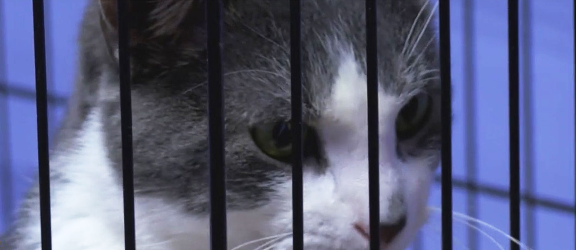Interactive Cat Humane Center