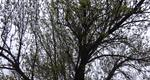How To Identify Ash Trees In Your Yard