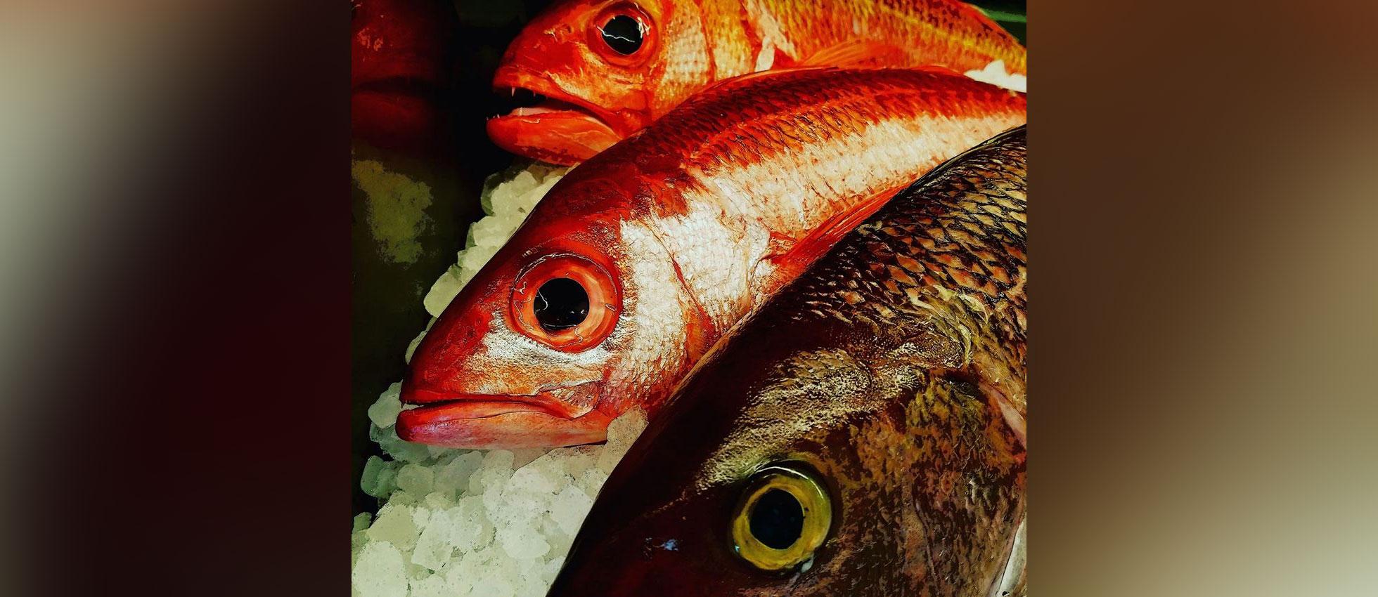 dakota seafood