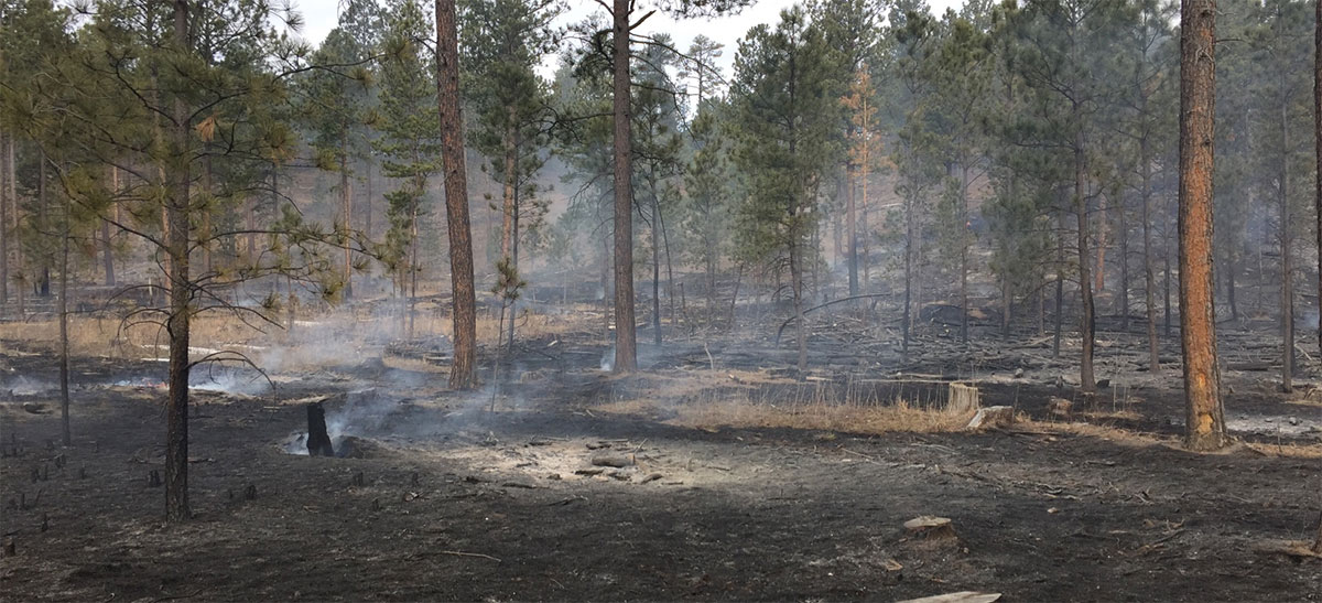 Playhouse Fire Custer State Park Fire