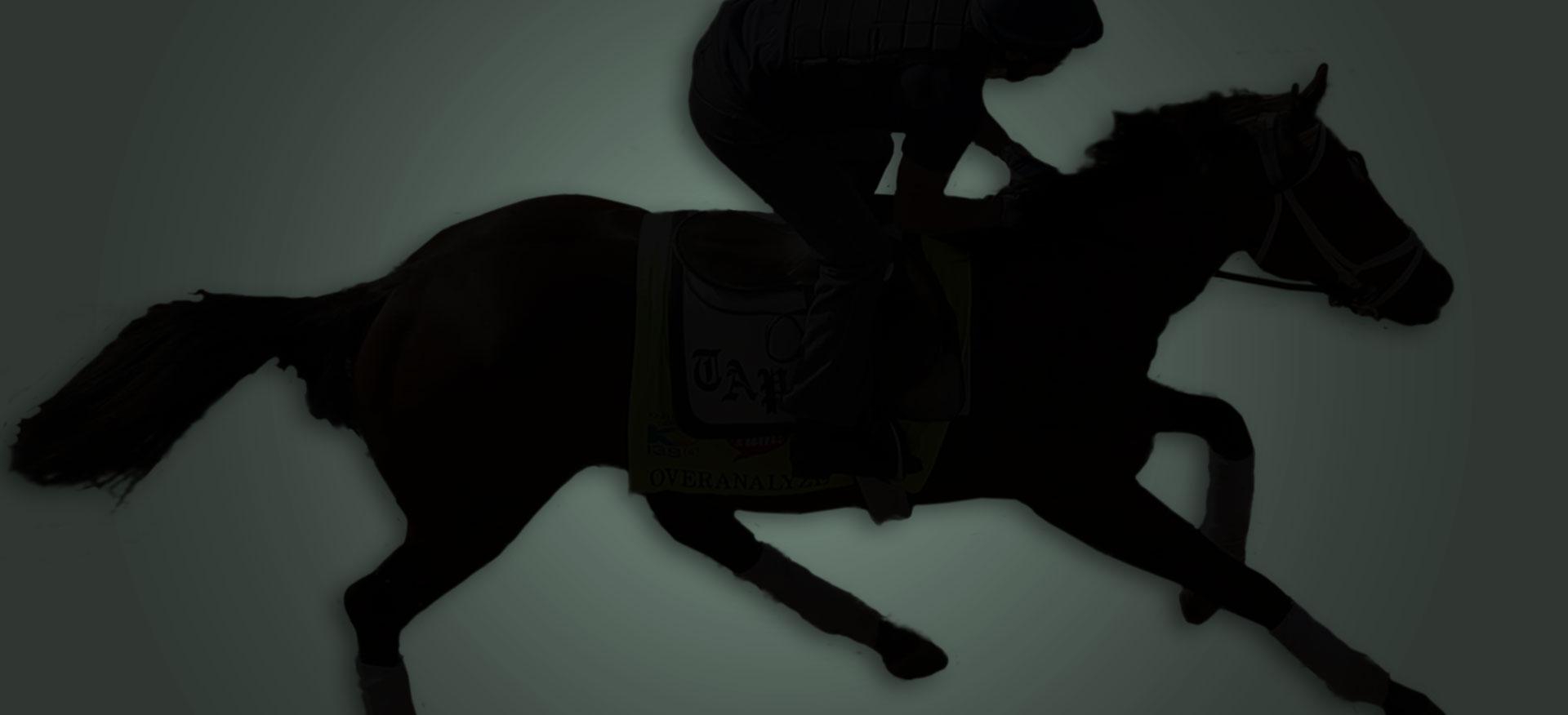 Race Horses Racehorse Racehorses