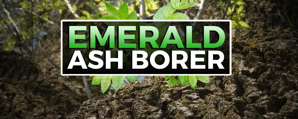 Emerald Ash Borer Banner Sfvrsn Night Eye For Edge Extension