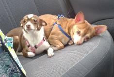Wolfy and Tiggy