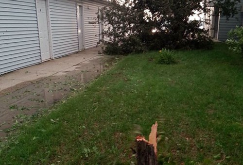 Tree snapped off in Huron
