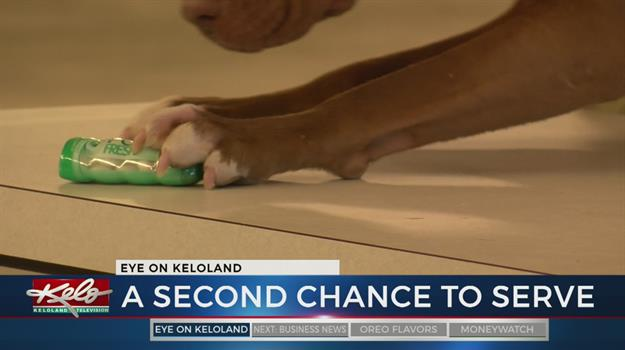 Inmates Help Train Dogs Who Help Vets
