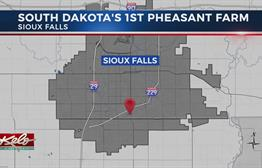 Sioux Falls Was Home To South Dakota's First Pheasant Farm