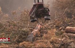 Crews Salvage Custer Park Timber