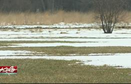 Does Your Grass Turn Greener Under The Snow Cover This Time Of Year?