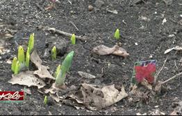 Soil Temperatures Are Climbing With Spring Sunshine