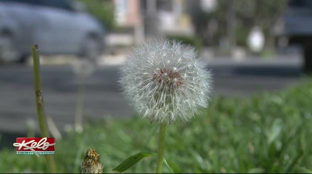 Natural Treatment For Allergies