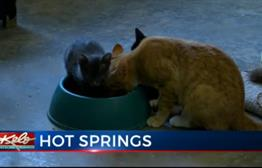 Animal Shelter Gets Help from Rapid City Business