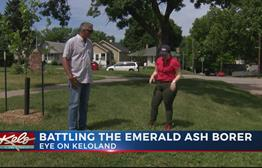 How Omaha Is Battling The Emerald Ash Borer